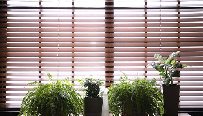 How to style plants in your home