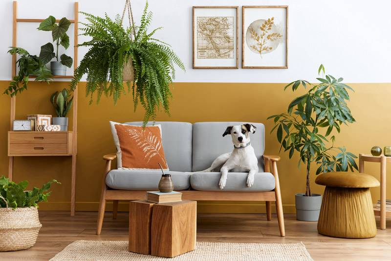 Sitting area with a grey sofa chair and half yellow walls