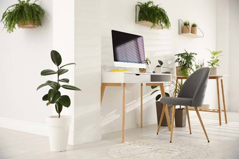 White home office with houseplants