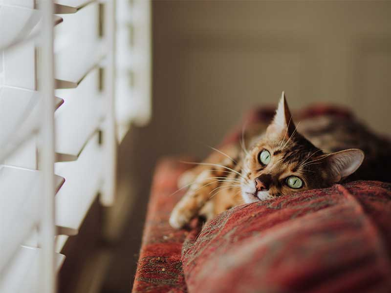Cat Laying next to window looking at a blind