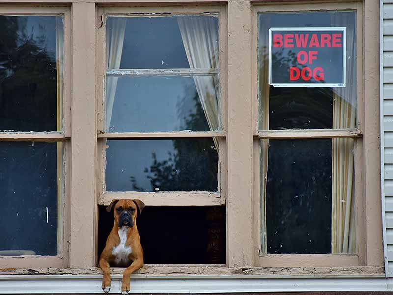 Dog looking out of a window